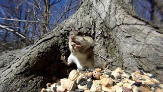 Chipmunks, birds, squirrels