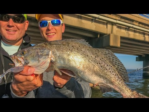 BIG speckled trout on world's longest artificial reef