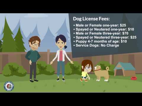 Why you really SHOULD get your dog licensed!
