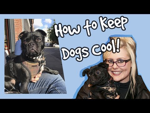 How to Keep Dogs Cool in the Summer Heat, Top 10 Dog Cooling Tips! Vlog Plus Competition! 🐶  ☀️