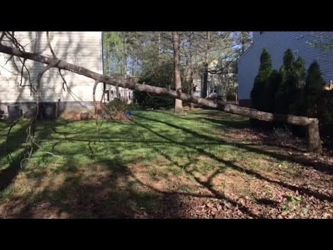 Cutting down a dead tree with Termites
