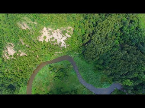 Beautiful Drone Flight Over Forest with Pink Floyd Sorrow (solo) 4K UHD