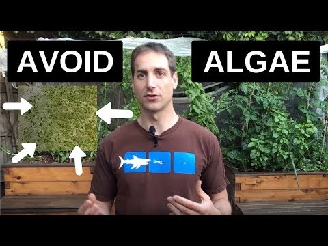 Avoid Algae In Aquaponics
