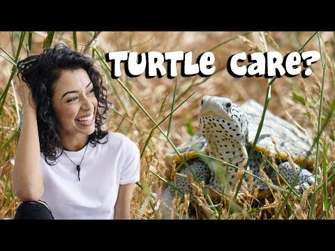 Liza Koshy got TURTLES | Advice for New Turtle Owners - Beginner Turtle Care Tips