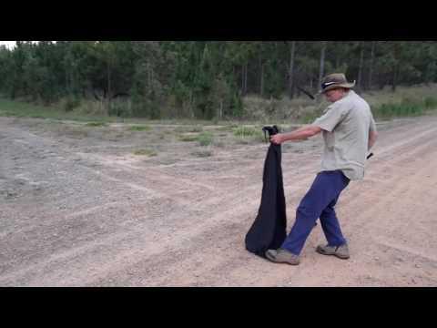 Release of Eastern Brown Snake