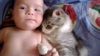 猫は赤ちゃんを守る - 猫は赤ちゃんを愛する - 最も面白い猫の映画2017 #84