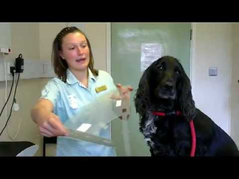 How to Fit a Buster Collar / Elizabethan Collar