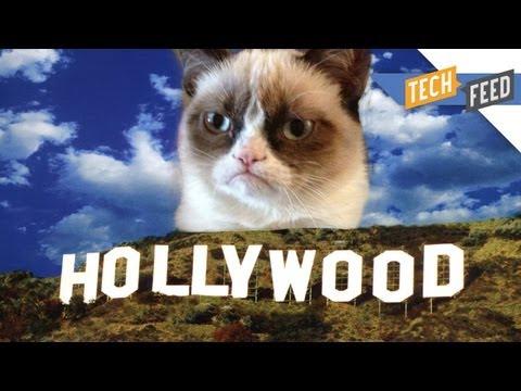 Grumpy Cat: The Movie!