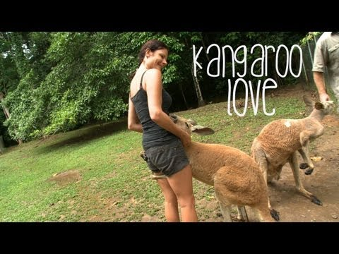 Xxx Mp4 Kangaroo Love Australia 3gp Sex