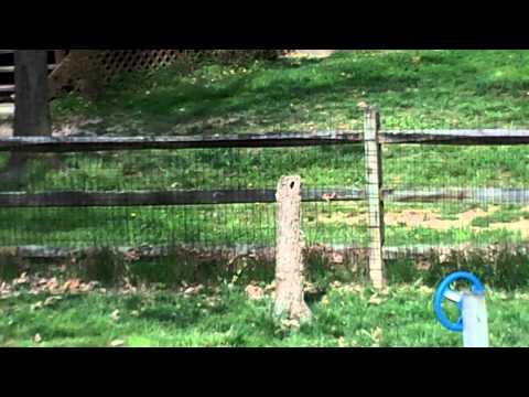 Backyard Nature - Bluebird Nest 2