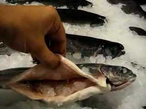Storing fish rainbow trout