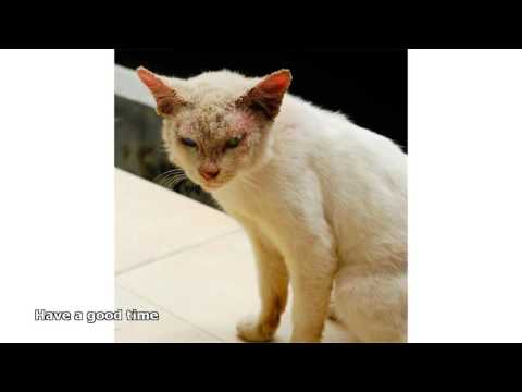 cats ringworm