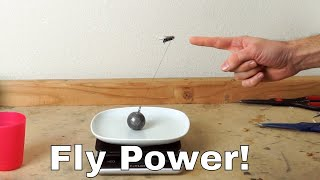 How Much Weight Can a Fly Actually Lift? Experiment—I Lassoed a Fly!