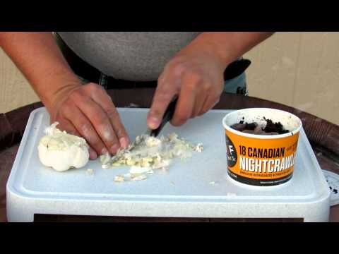 How To Make Garlic Worms For Bait