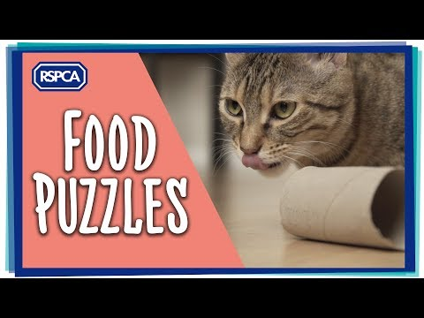 Food Puzzles - Keeping your Cat Happy Ep 2