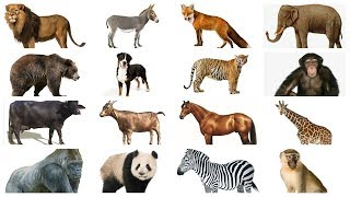 Learn Animals names with Pictures in English | Farm Wild Animals for kids
