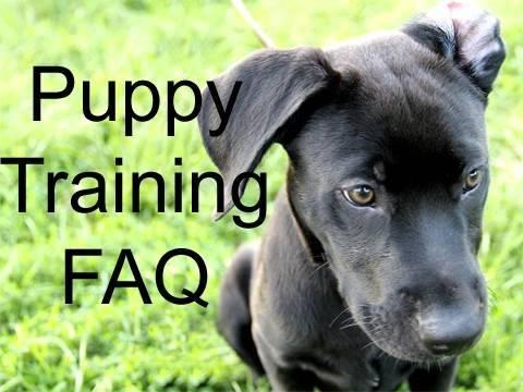 Puppy Training - Viewer Q&A