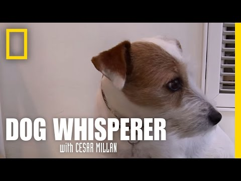 Dog Anxiety | Dog Whisperer