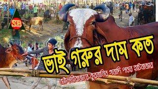 ভাই গরুর দাম কত|মৌলভীবাজারে কুরবানির পশুর হাটবাজার উদ্বোধন|qurbani hutbazar|Sunar bangla production