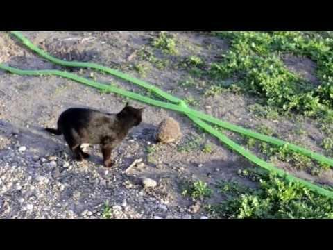 hedgehog visiting garden