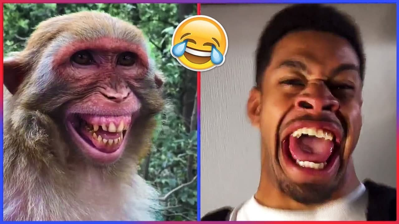 Try Not To Laugh Challenge! 😹😹😹 | If You Laugh You Lose
