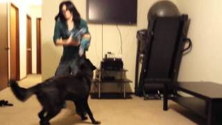 Playing Rough with a Wolfdog Puppy (PT2)