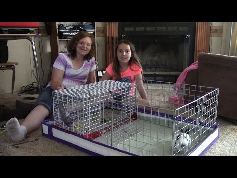 We're Making A Play Pen For Our Bunny!