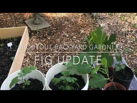 Fig Update