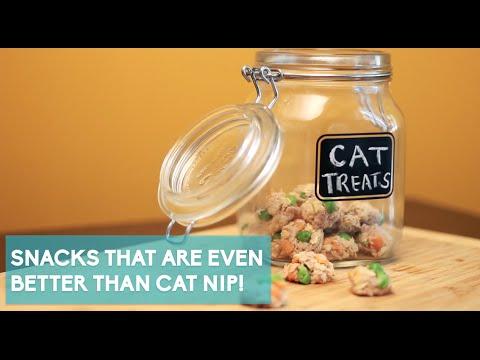 No-Bake Tuna Treats Your Cat Will Love