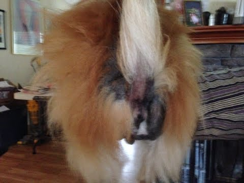 Dogs Hair Loss This May be the Cause This also stopped the itching