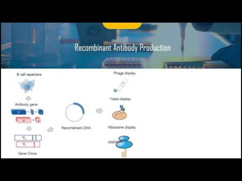 Introduction of Recombinant Antibody