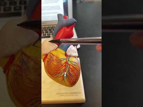 heart- exterior view (TCC)