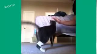 HOT New funny cats Vines Compilation 2014