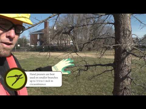 How to Prune: Small Branch Pruning