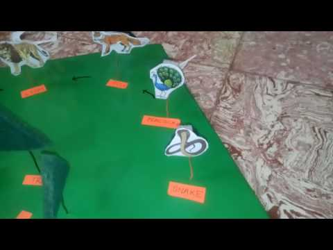 Food chain 3d model