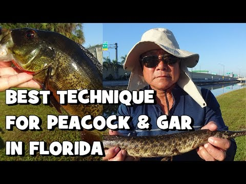 The BEST WAY to Fish for PEACOCKS & GAR in FLORIDA (FL Slam EP5) (Give-Away Included) (Sunrise, FL)