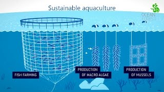 Ocean Forest - Sustainable aquaculture