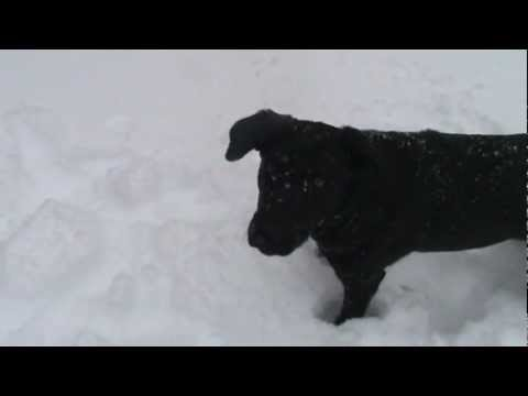 DOGS FIRST SNOW