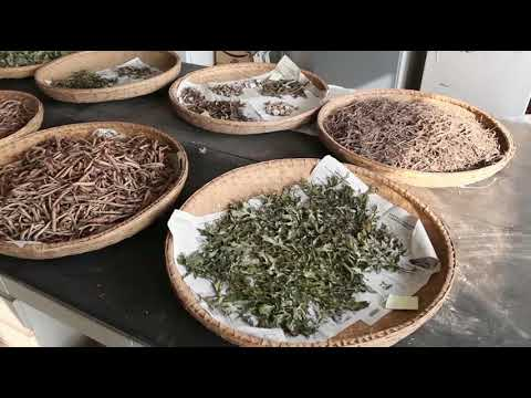 Shanghai University of Traditional Chinese Medicine Welcomes You