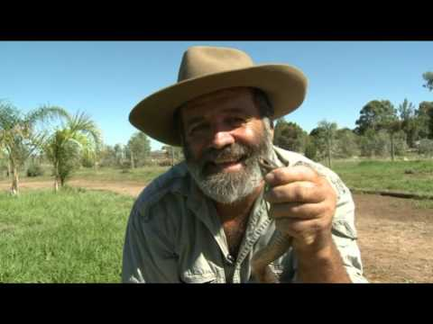 Rob Bredl - Brown Snake Bites