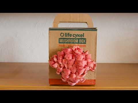 Pink Oyster Mushroom Time Lapse: Life Cykel Coffee Mushroom Box