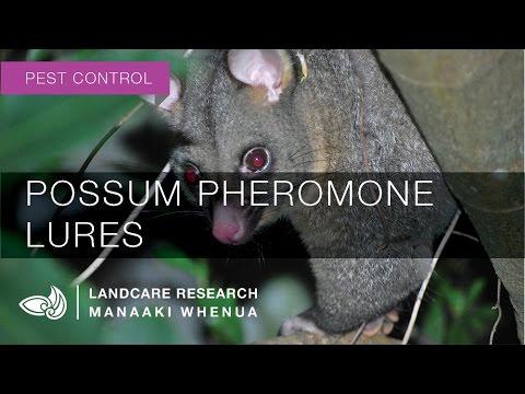 Possum pheromone lures