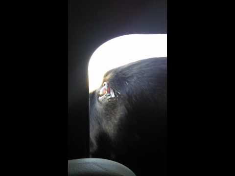 Holly car ride 65mph