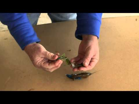 Keys To Catching Fish: Crawfish Bait Rigging