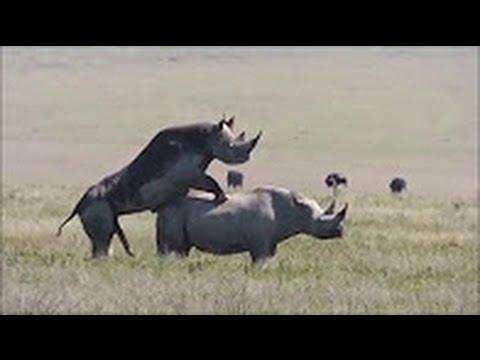 Xxx Mp4 Sex And Rhino 3gp Sex
