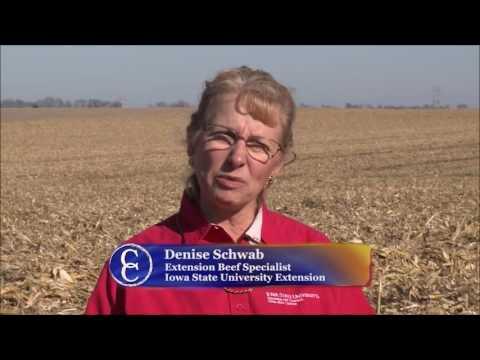 Baling Corn Stalks for Forage