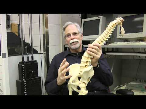 Waterloo's Dr. Spine, Stuart McGill