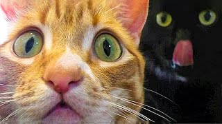 🤣 Funniest 😻Cats And 🐶 Dogs - Try Not To Laugh - Funny Pets Vines 😇