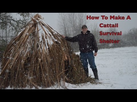 How to make a Weatherproof Cattail Shelter. Primitive Bushcraft Survival Skills