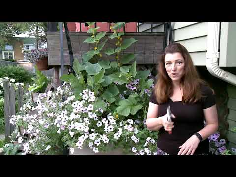 How to Prune a Wave Petunia